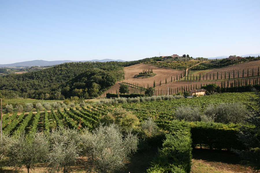 Vineyards_IMG_0312.jpg