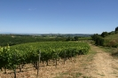 Vineyards_1