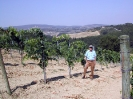 Vineyards_2