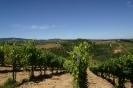 Vineyards_2