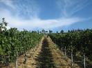 Vineyards_3
