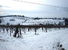 Vineyards_7